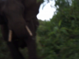 The moment the elephant charged