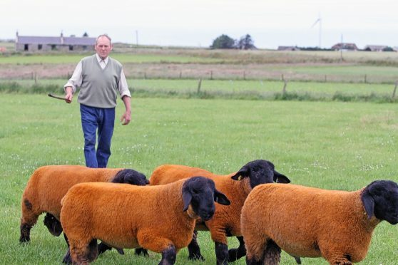 Jimmy Douglas with some of his prized Suffolk sheep