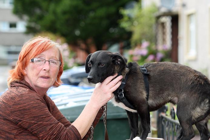 Dog Rescue Inverness Scotland