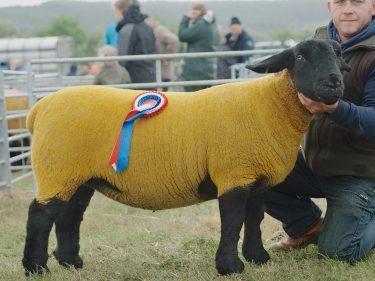 Robbie Innes' Suffolk champion