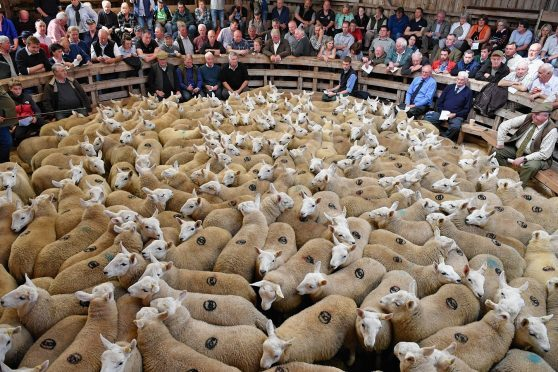 New Zealand and UK lamb producers could work together to develop new markets