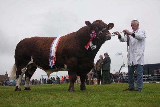 Beef interbreed champion Pentland Emperor