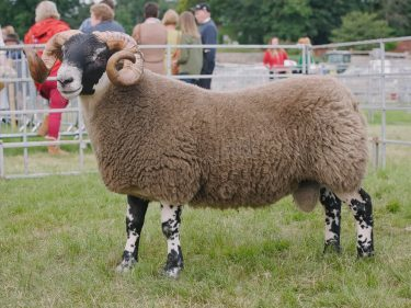 The Blackie champion stood reserve interbreed
