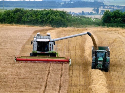 Cereal production is back 11% this year