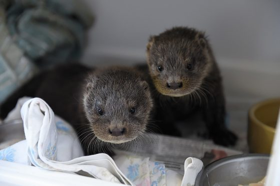 The New Arc otters, Dee and Don