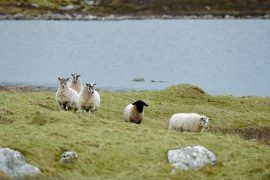 Crofters have called for a separate policy for the crofting sector.