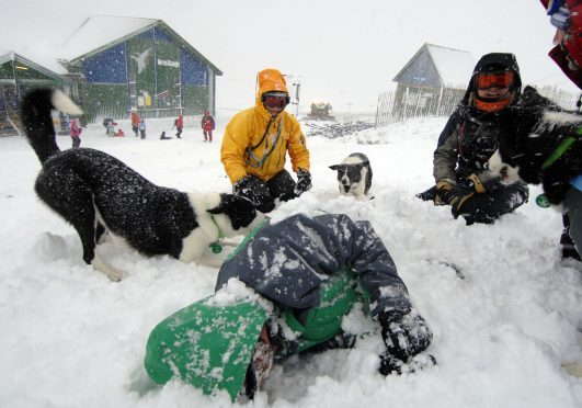 Member of the Search and Rescue Dogs Association (SARDA) Scotland taking part in a training exercise at Nevis Range