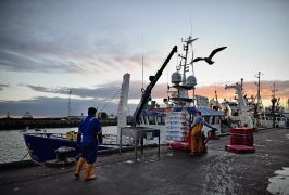 Cod's Back On The Menu At The Peterhead Fish Market