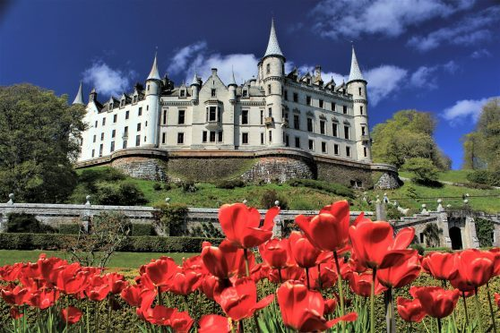 Dunrobin castle, pictured through the tulips. Picture courtesy of reader Ali Bain, Garmouth