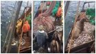 The footage shows the men reeling in the large nets, only to find thousands of small fish, and a sea lion inside.