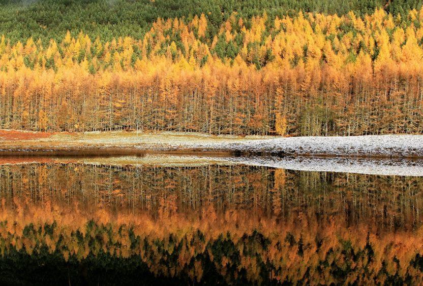 Autumn in Glen Cannich. Photograph: Ali Bain, from Garmouth