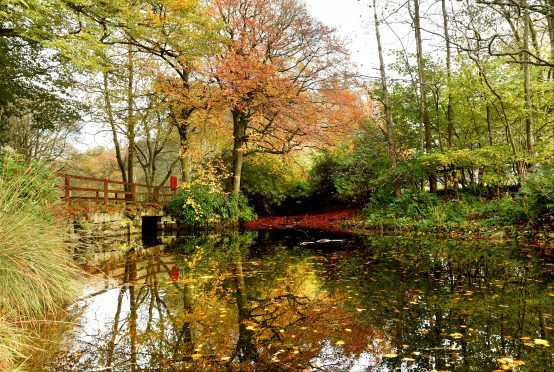 Autumn colours at Aden Country Park, Mintlaw. Photograph: Kevin Emslie