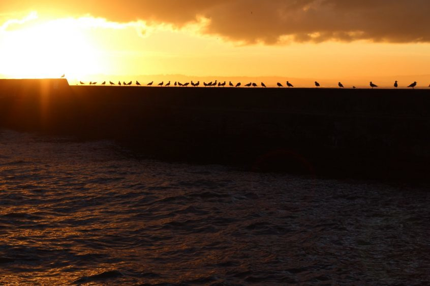 Birds silhouetted as the sun sets at the harbour in Portgordon, Moray. Picture courtesy of reader Lesley Murray