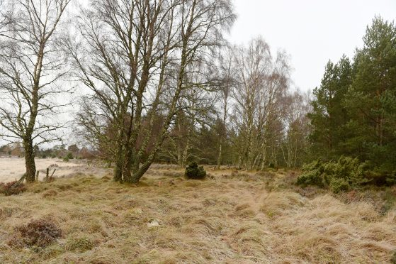 The area of ground at the former Inverdruie sawmill in Rothiemurchus where new homes will be built.
