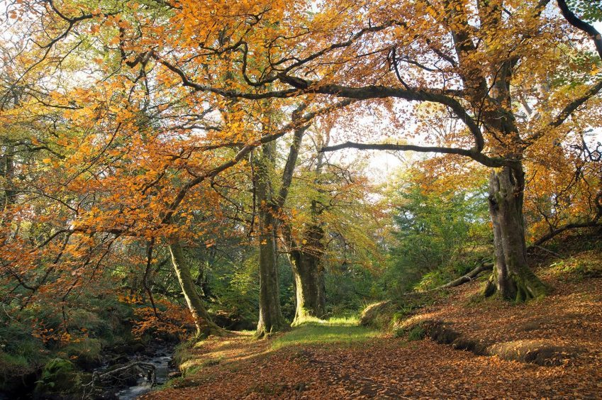 Autumn colours in the castle grounds, Stornoway. Photograph: Ronnie MacAlpine, of Lewis