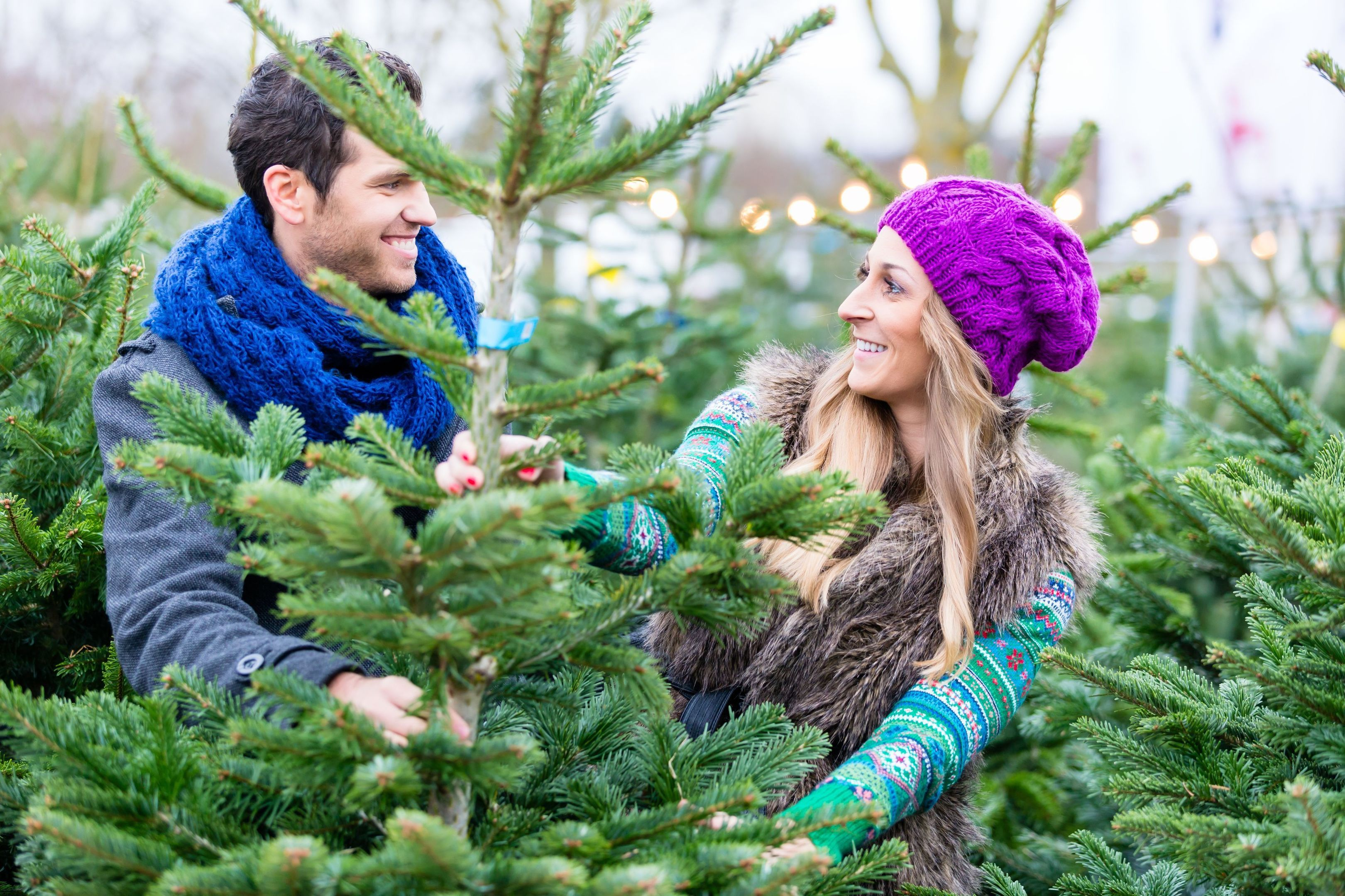 A Generic Photo of a couple choosing a Christmas tree. See PA Feature GARDENING Trees. Picture credit should read: PA Photo/thinkstockphotos. WARNING: This picture must only be used to accompany PA Feature GARDENING Trees.