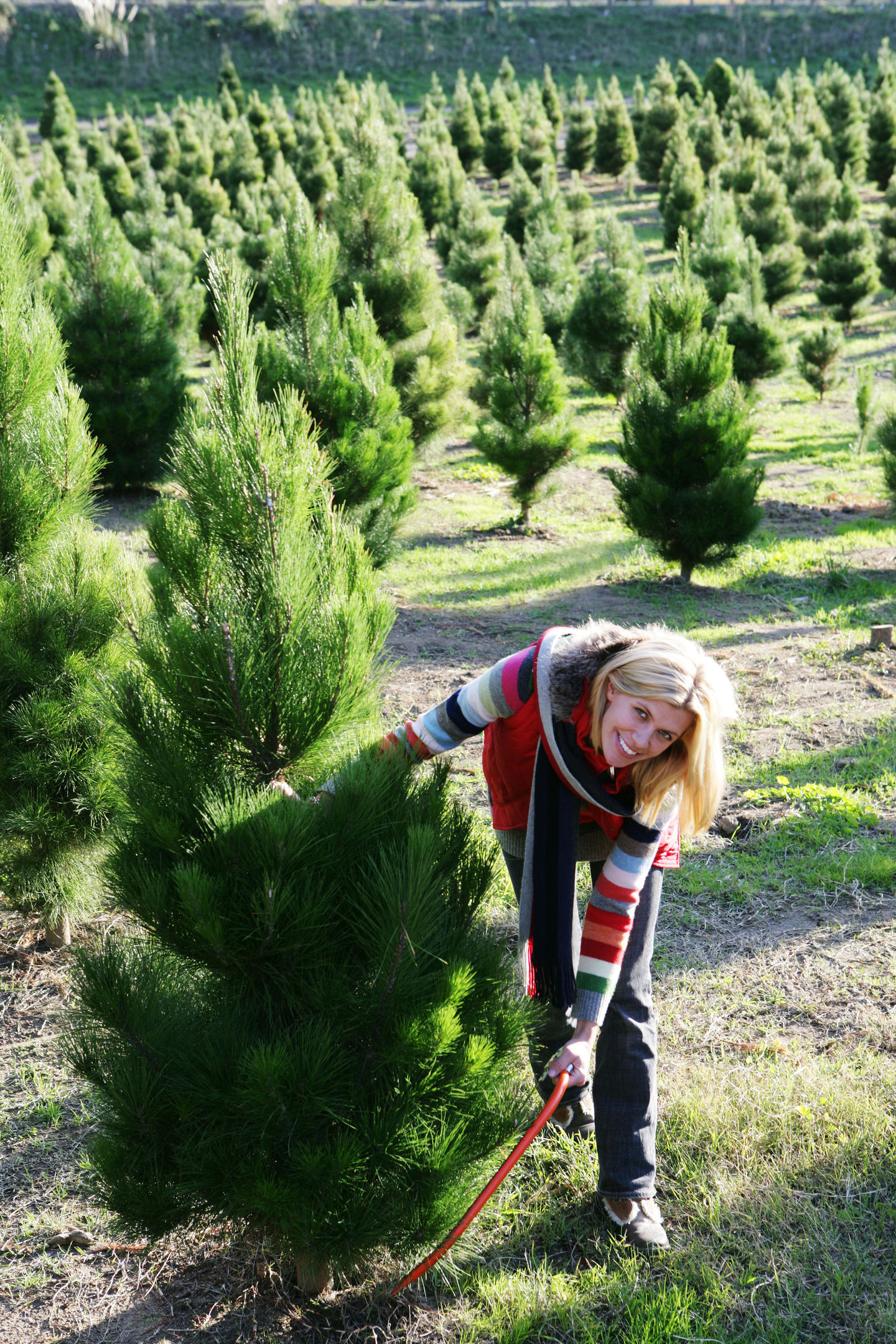 A Generic Photo of a woman choosing a Christmas tree. See PA Feature GARDENING Trees. Picture credit should read: PA Photo/thinkstockphotos. WARNING: This picture must only be used to accompany PA Feature GARDENING Trees.