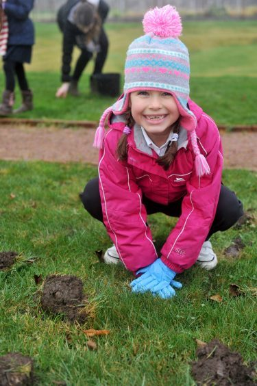 Isla McGregor makes sure her bulbs are firmly planted.