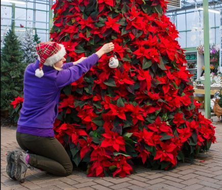 Christmas Sprays Uk.How These Festive Flowers Were Used To Create A Stunning