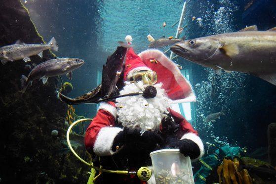 Santa gave the residents of Macduff Marine Aquarium their Christmas dinner.