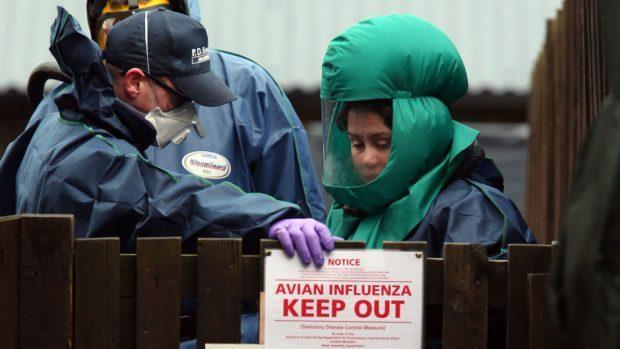 United Kingdom detects wild case of bird flu