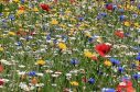 Council grass areas could be replaced with wild meadows.
