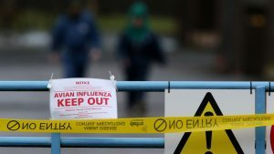 Defra has confirmed that bird flu has been found at a turkey farm in Lincolnshire