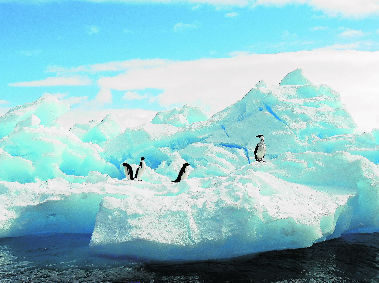 yl-antartica