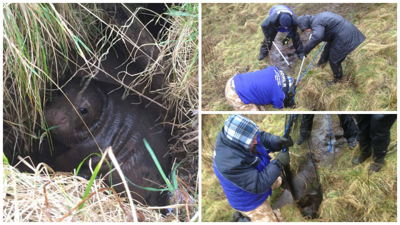 Rescuers saving the baby seal pup from a ditch near Slains Castle. Credit: Keith Marley/Lee Watson.