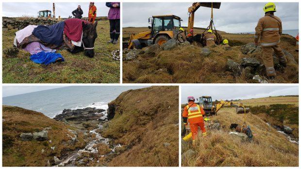 Pictures courtesy of Scottish SPCA