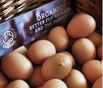 Organic food sales increased by 20% in Scotland last year.