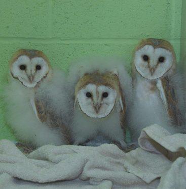 Alvin, Simon and Theodore were born several months premature.