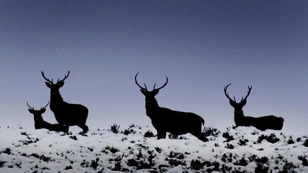 """MSPs said looking after Scotland's wildlife is """"everybody's problem"""""""