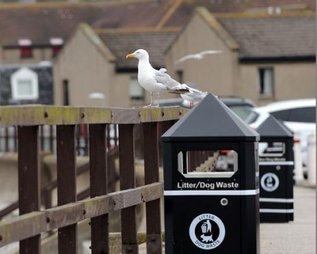 A seagull at Stonehaven sea front