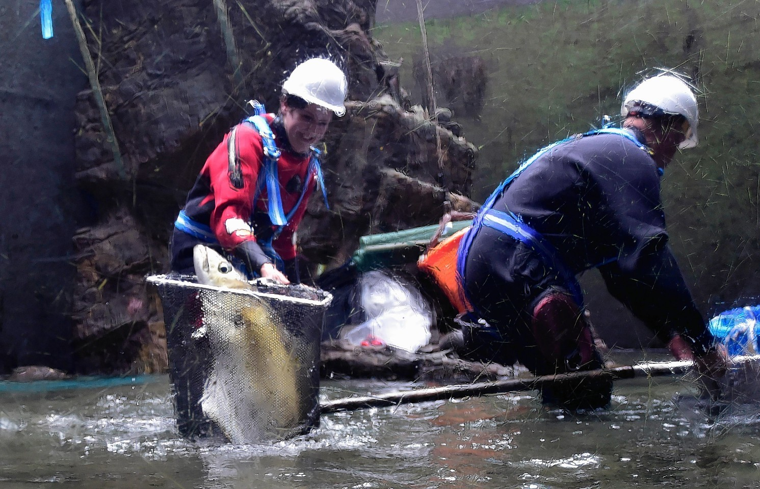 DIVERS  CATCH THE FISH WITH NETS AS THE WATER LEVEL FALLS