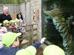 Some children attempted to reach out and touch the tiger.
