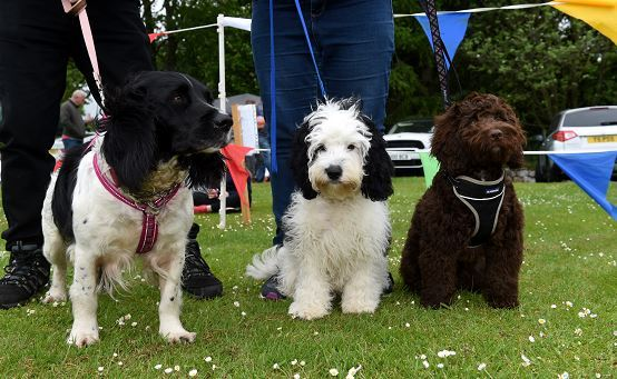 Some of the furry attendees at the annual DAWGS day out at Haddo event