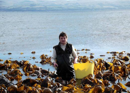 Iain McKellar collecting seaweed for his shop.