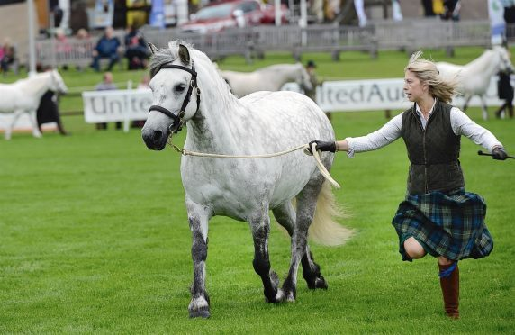 Early morning Highland Pony judging at the Highland Show.