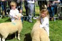 Entries are up in the sheep section, which includes classes for young handlers.