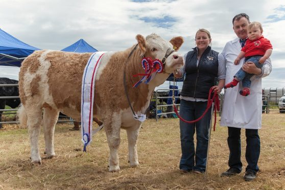 Young exhibitor, one year old Jenson Gunn, with mum and dad, Joanna and Jonathan and his champion of champions Simmental.
