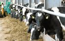 Increased milk prices helped contribute to the rise in fortunes.