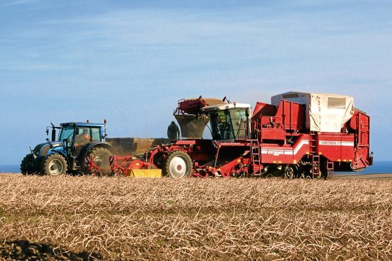 Many people are unaware of what is being harvested in a field