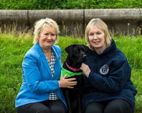 Battersea Dogs Home Animal Cruelty