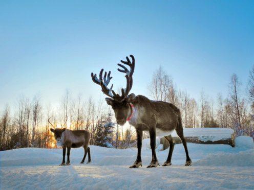 Reindeer aussprache