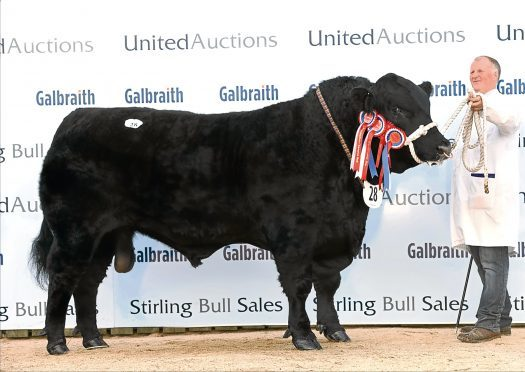 Linton Gilbertines President was Aberdeen-Angus champion