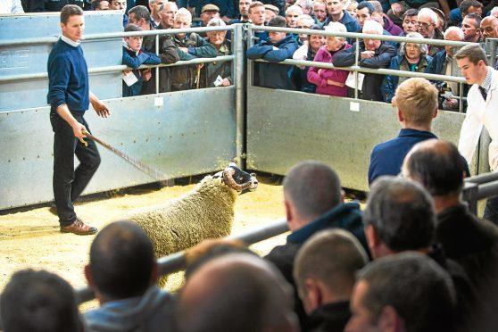 Ian Hunter selling one of his top Blackface lambs at Dalmally