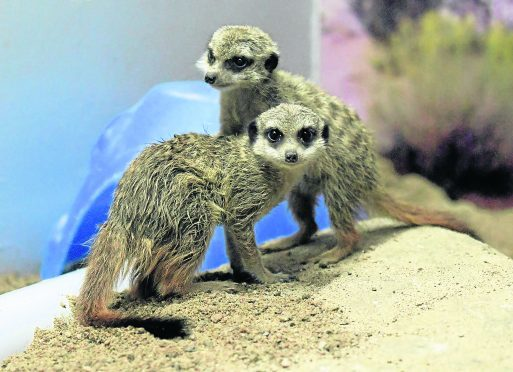 "Meerkats Dee and Don were ""hugely popular"" at the Hazlehead Park attraction."