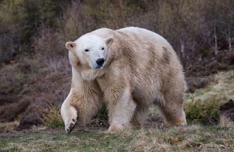 Victoria the Polar Bear gave birth earlier this year