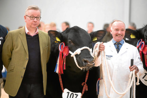 Michael Gove, the champion Aberdeen-Angus bull and stockman Alistair Cormack